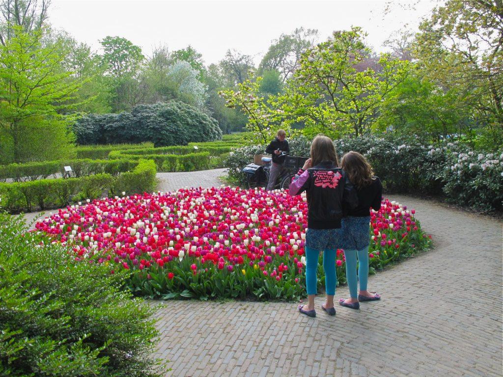 Tulips in bloom in Vondelpark