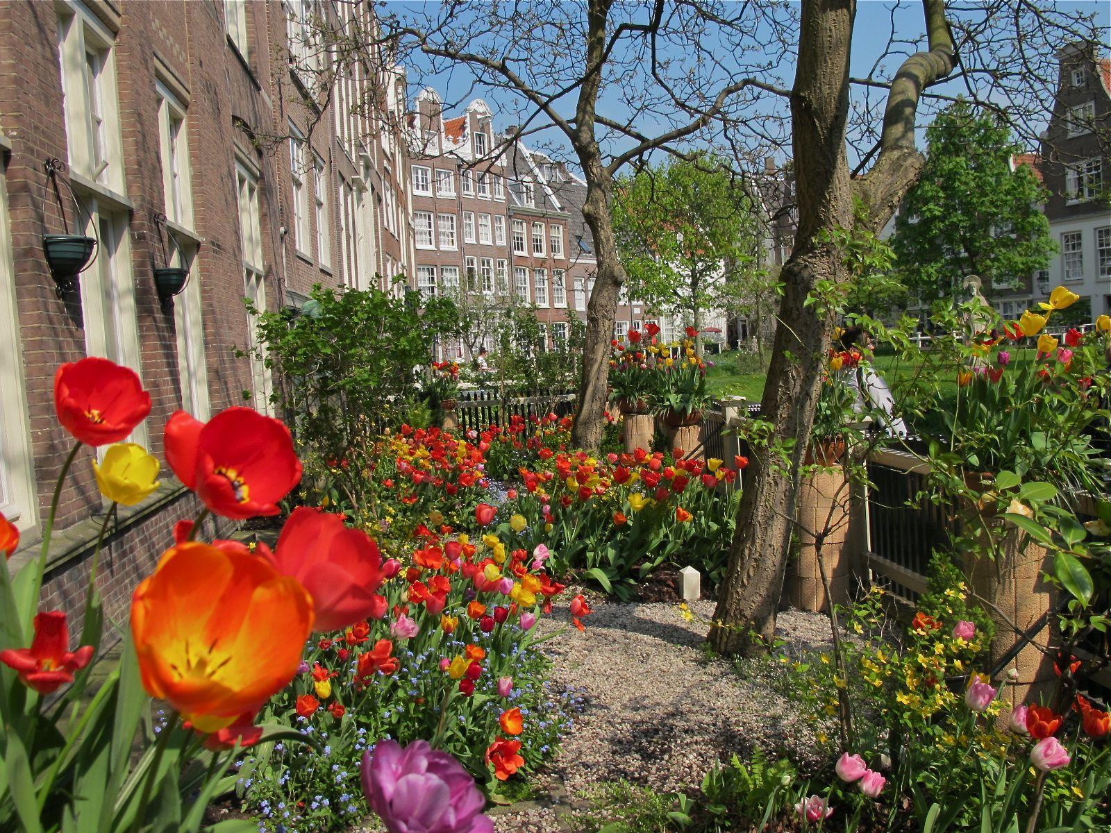 garden in amsterdam - Amsterdam Garden
