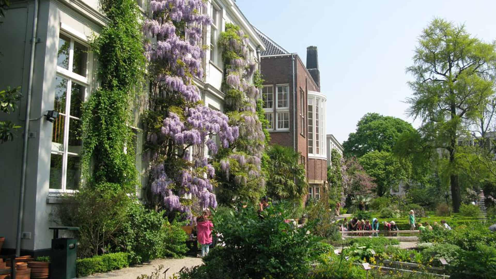 Botanische Tuin Amsterdam : Amsterdam botanical garden