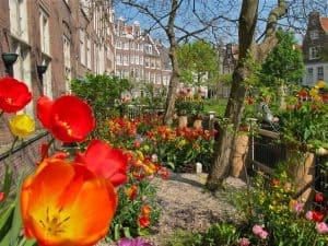 Tulip garden in bloom in Amsterdam