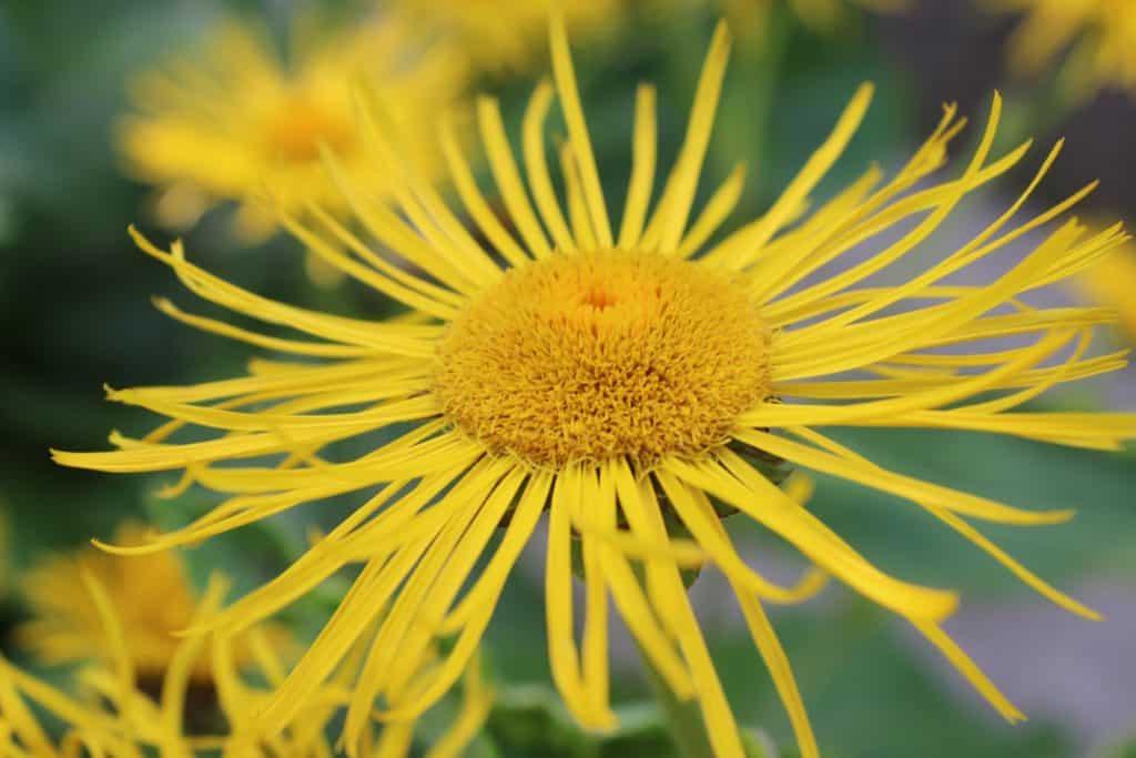 Flower Hortus