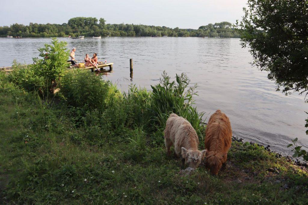 open water Amsterdam Nieuwe meer